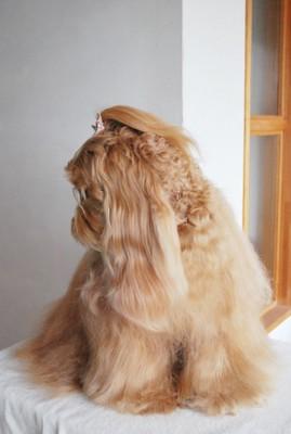 全身を写した犬