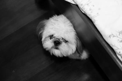 ベッドの下に隠れてこちらを見つめている犬