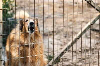 外に向かって吠える犬