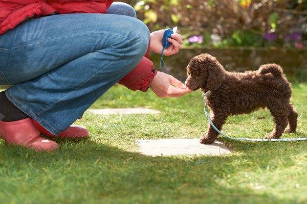 ご褒美を与える人と犬