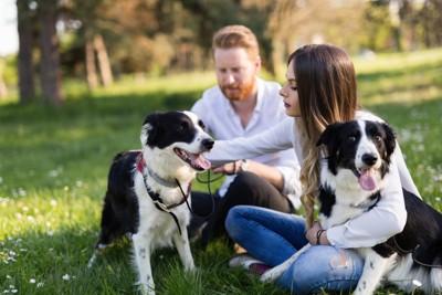 夫婦と2匹の犬