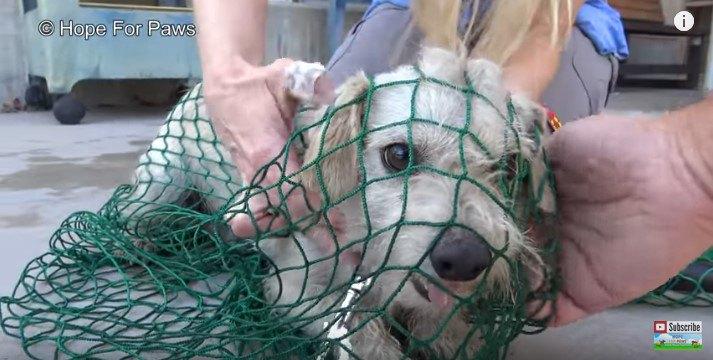 網に捕まった犬