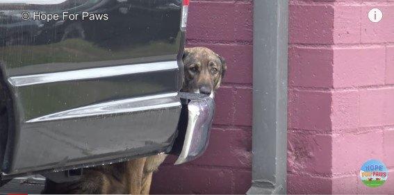車の後ろに隠れる犬