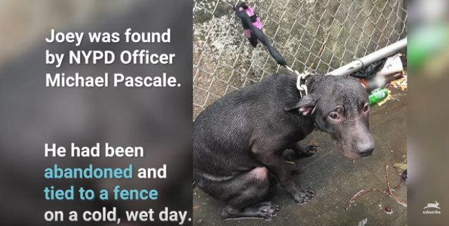 雨の中、鎖にしばられた犬