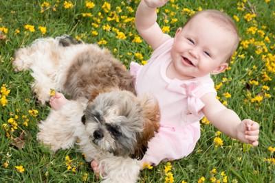 シーズーと赤ちゃん