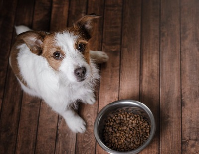 フードを食べずにこちらを見上げる犬