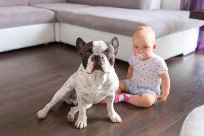 赤ちゃんを守る犬