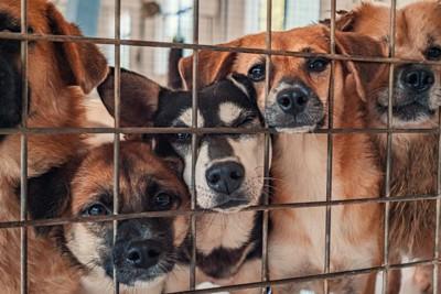 鉄格子の中からこちらを見つめる犬たち