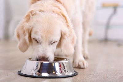 食事中の犬