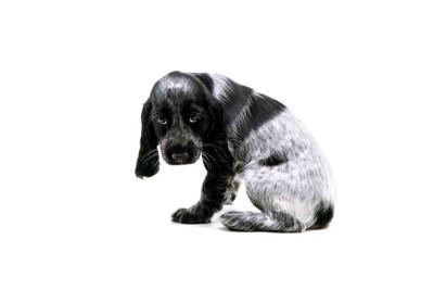 背中を丸めていじけている子犬
