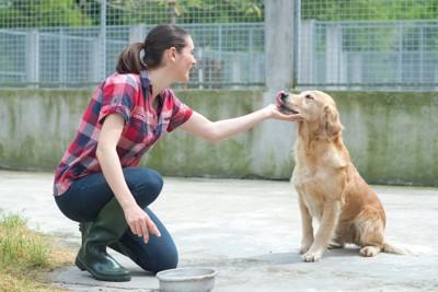 保護犬の世話をする女性