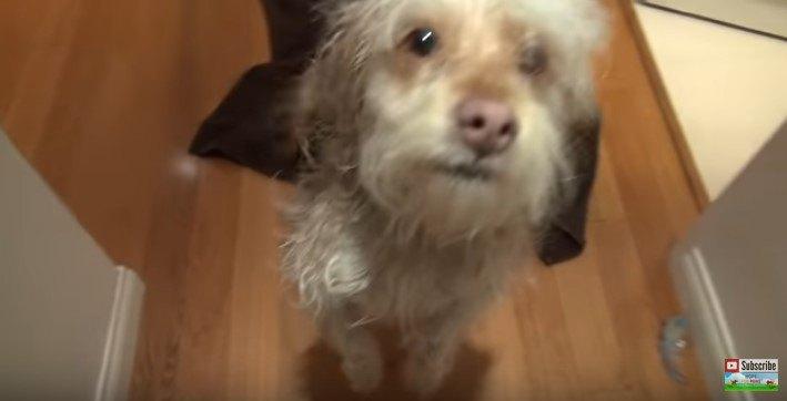 後足で立ち上げる犬