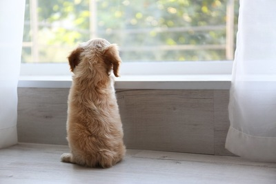 窓辺に佇む子犬の後ろ姿