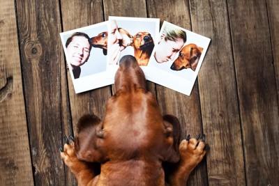 3枚の写真を見ている犬