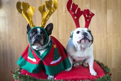 クリスマスのコスチュームを着た犬