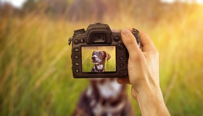 カメラを持つ人の手とカメラにうつる犬