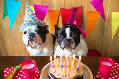 誕生日会の犬