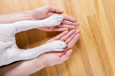 人間の手に犬の足が乗る