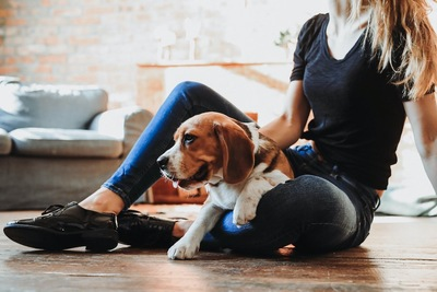 飼い主の膝の上に乗って甘える犬