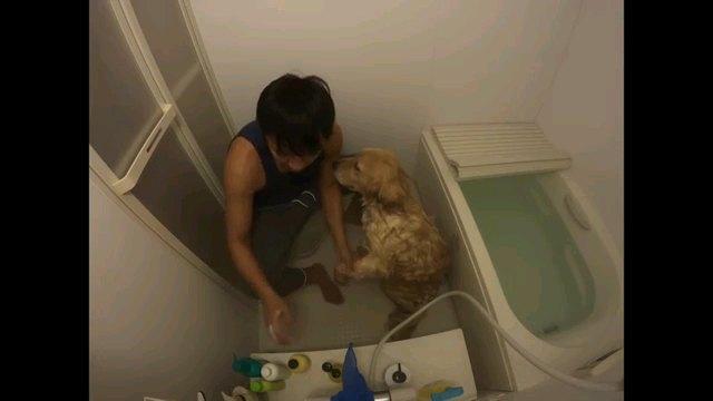 シャンプーする犬
