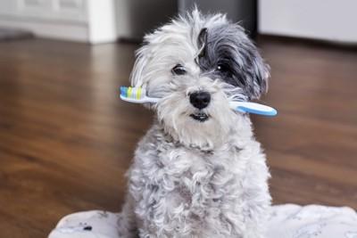 歯ブラシをくわえた犬
