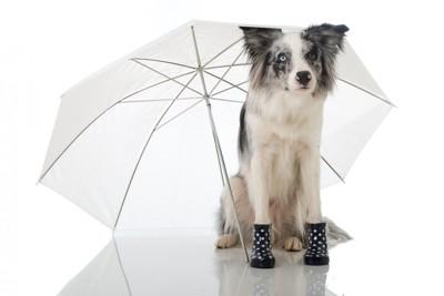 傘を差す長靴を履いた犬