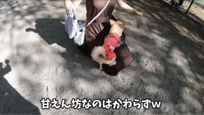 膝の上に乗る犬
