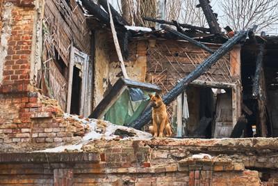 崩れた家のそばに座る犬