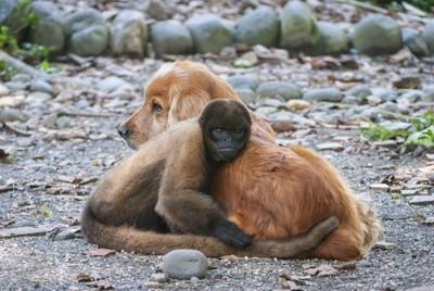 抱き合う犬と猿