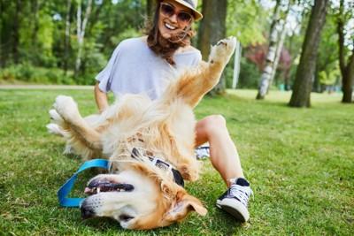 芝生の上で転がる犬と飼い主さん
