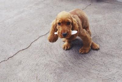 何かを咥えている犬
