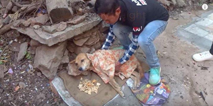 救助される犬