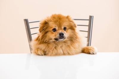 テーブルに手を置き、椅子に座っている犬