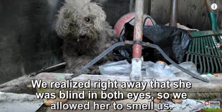 隠れるようにただずむ汚れた犬