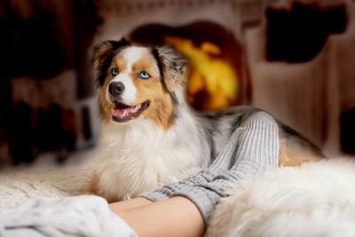 暖かそうな部屋にいる犬