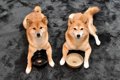 食器の前でフセをする犬