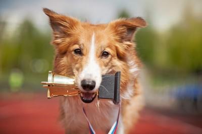 優勝カップを咥える犬