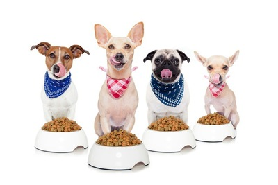 #フードの入ったボウルと4匹の犬#