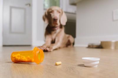 床に転がる医薬品と垂れ耳の犬