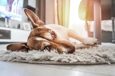 ホットカーペットの上で横になる犬