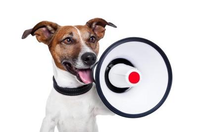 拡声器を持った犬