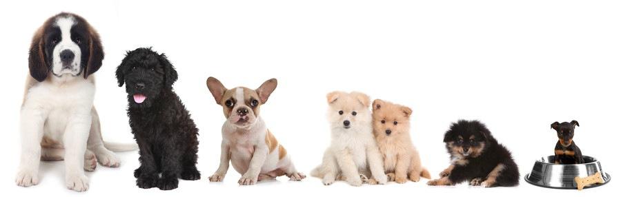 大小並んだ犬