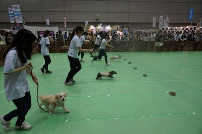 犬の運動会