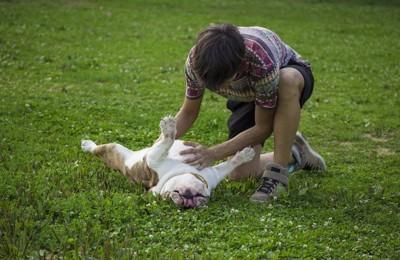 お腹を撫でられて嬉しそうに寝転ぶ犬