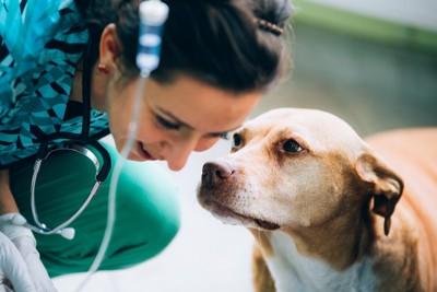 点滴中の犬と病院スタッフ