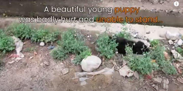 立ち上がる事が出来ない子犬
