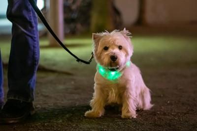 緑に光る犬の首輪