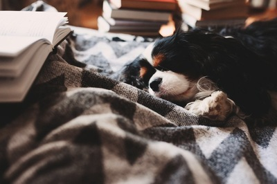 ブランケットの上で寝ている犬