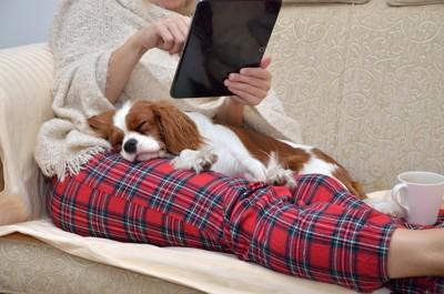 ソファーでくつろぐ犬と飼い主