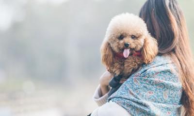 女性に抱かれて舌を出す犬
